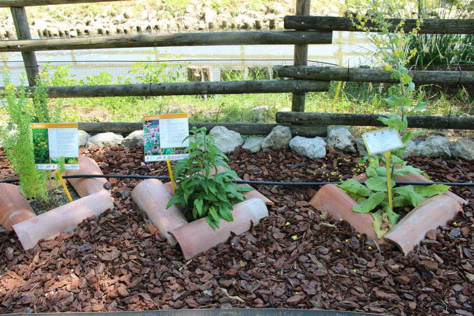 Un giardino in citt - Immagini aiuole per giardino ...